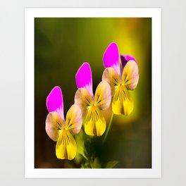 Colorful violets  - beauties of nature - #Society6 - #Buyart Art Print