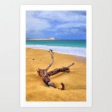 Island Beach Driftwood Art Print