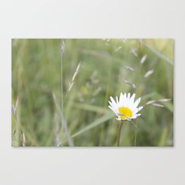 wind-pollinated flowers • nature photography Canvas Print
