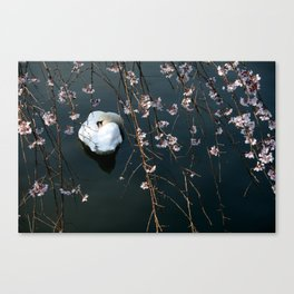 Amidst the blossoms Canvas Print