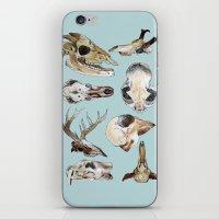 skulls iPhone & iPod Skins featuring Skulls by Katelyn Patton