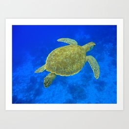 Wildlife: Green Turtle III Art Print