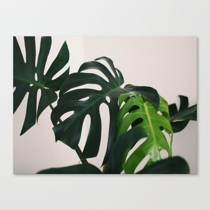 Minimalist Mid Century Scandinavian Style House Plant Mostera Green Leaf Zen Photo Leinwanddruck