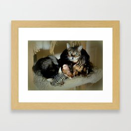 Three Close For Comfort Framed Art Print