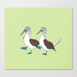 Blue-footed Boobies on a Walk Canvas Print