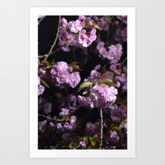 Goodnight Sakura  Art Print