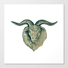 Cashmere Goat Head Drawing Canvas Print