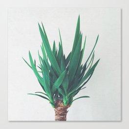 Yucca Canvas Print