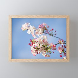 Crabapple blossoms Framed Mini Art Print