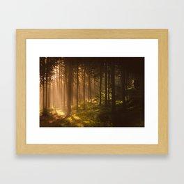 Morning forest Framed Art Print