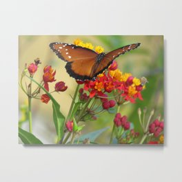 Butterfly queen monarch photo Metal Print