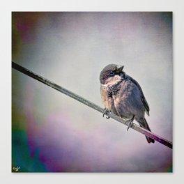 A New York City Sparrow Canvas Print