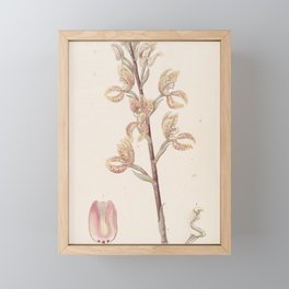 Flower 067 govenia fasciata Linden s Govenia28 Framed Mini Art Print
