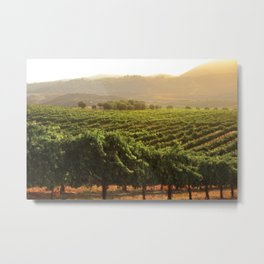 Wine Country Morning Metal Print