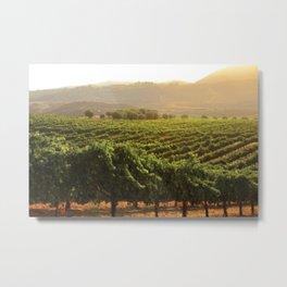 Wine Country Morning Metal Print