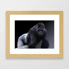 Strong Male Gorilla Framed Art Print