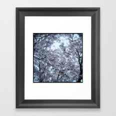 Cherry Blossoms in Spring Framed Art Print