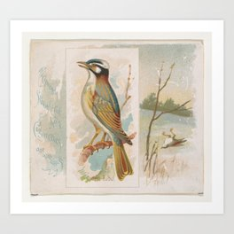 Chinese Bulbul, from the Song Birds of the World series (N42) for Allen & Ginter Cigarettes Art Print