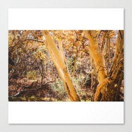 Trees in Arizona Canvas Print
