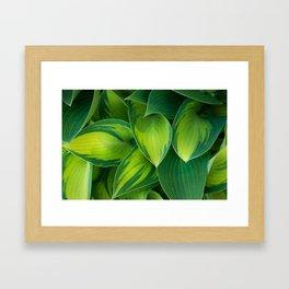 Hosta Camouflage Framed Art Print