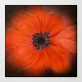 Poppy Square Canvas Print