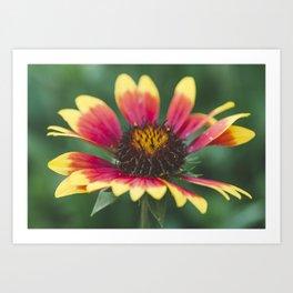September flower Art Print