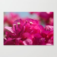 Bougainvillea flowers 843 Canvas Print