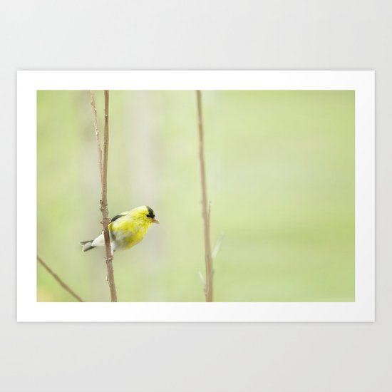 Little Mellow Yellow Art Print
