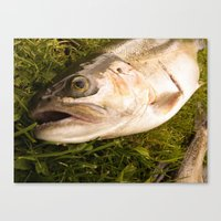 trout Canvas Prints featuring Trout by Shaun Drew