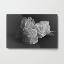 White Roses in the Shadows Metal Print