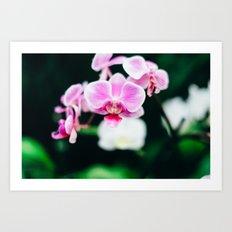 Fuji Color Orchid  at FPC Art Print