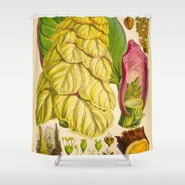 Illustration Of Himalayan Plants Vintage Scientific Botanical Illustration Shower Curtain