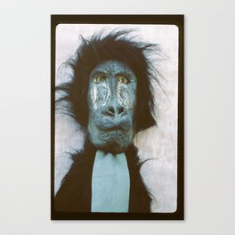 Blue Baboon Canvas Print