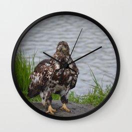 Immature Closeup Wall Clock
