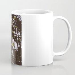 Sunlight through new Spring Beech leaves (Fagus sylvatica). Norfolk, UK Coffee Mug