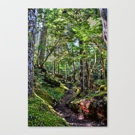 Enchanted Forest - Washington State Canvas Print