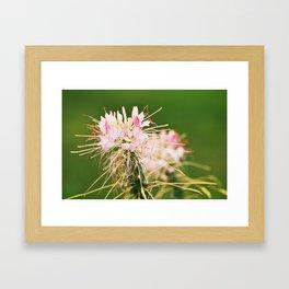 Flower in public garden Framed Art Print