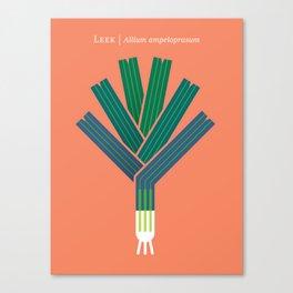 Vegetable: Leek Canvas Print