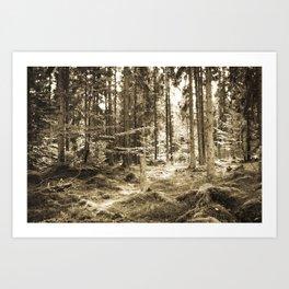 Quiet Forest II Art Print