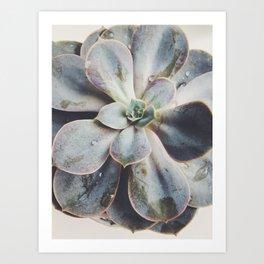 beauty succulent Art Print