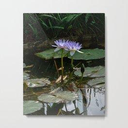 Purple Lilypad Flowers are Blooming in Spring Metal Print
