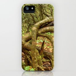 Dancing trees in the cloud forest  -  Tradewinds trail El Yunque rainforest PR iPhone Case