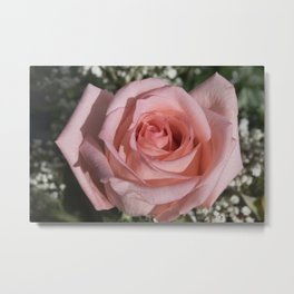Valentine's Day Roses 22 Metal Print