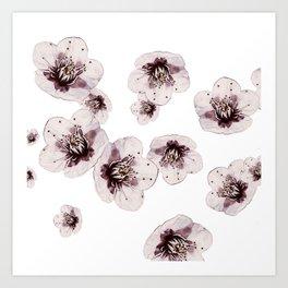 Hana Collection - Falling Sakura Art Print