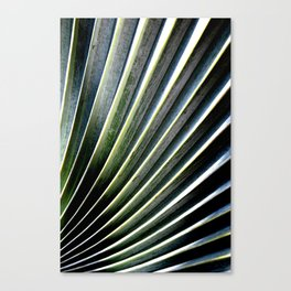 Winding Ridge Palm Tree Canvas Print