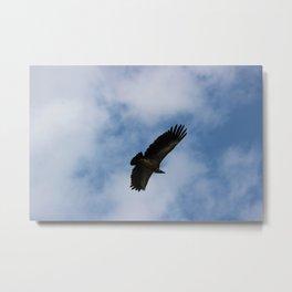 Vulture flight Metal Print