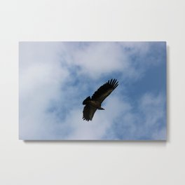 Vulture flight Metal Print