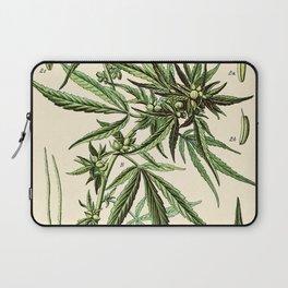 Cannabis Sativa - Vintage botanical illustration Laptop Sleeve
