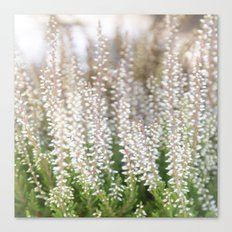Whitegreen Canvas Print