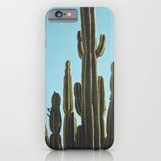 At the Cactus Garden Slim Case iPhone 6s